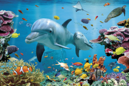 Image result for ocean animals